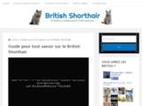 Nouvelle communauté autour du British Shorthair